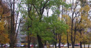 Nowe nazwy parków na Siedlcach – konsultacje